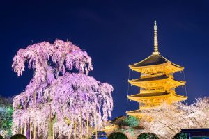 14-Day Japan's Best Of The West Cherry Blossoms Itinerary