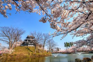 14-Day Pass – Cherry Blossom Deluxe Itinerary