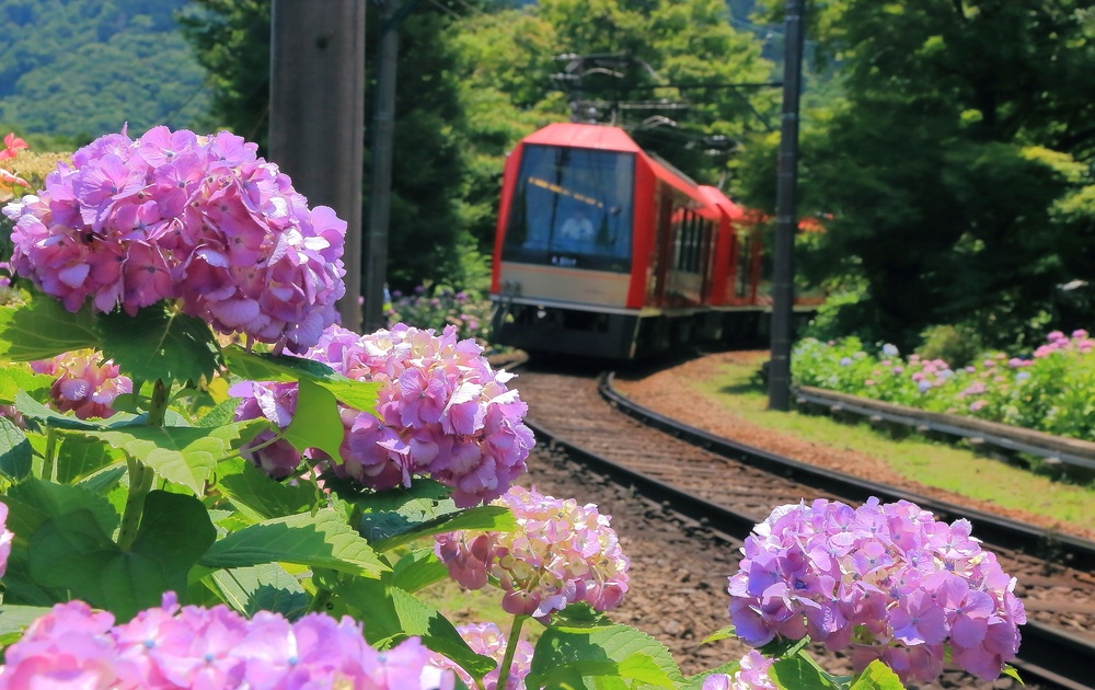 The Hakone Tozan Train passes