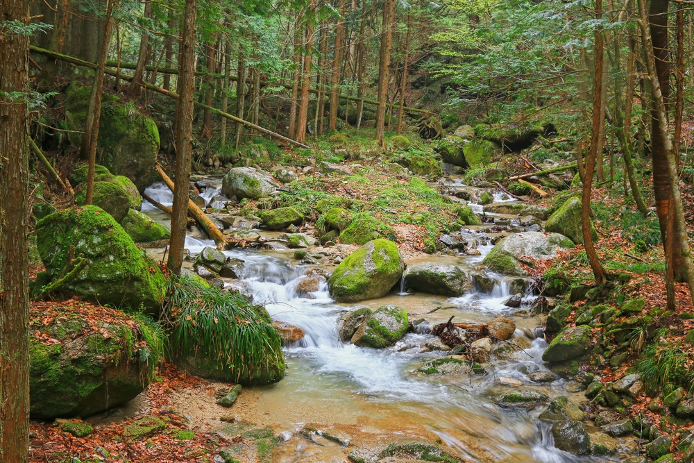 Waterfall and stones covered in moss, green area with unspoiled nature at Nakasendo walking trail from Magome to Tsumago, Japan