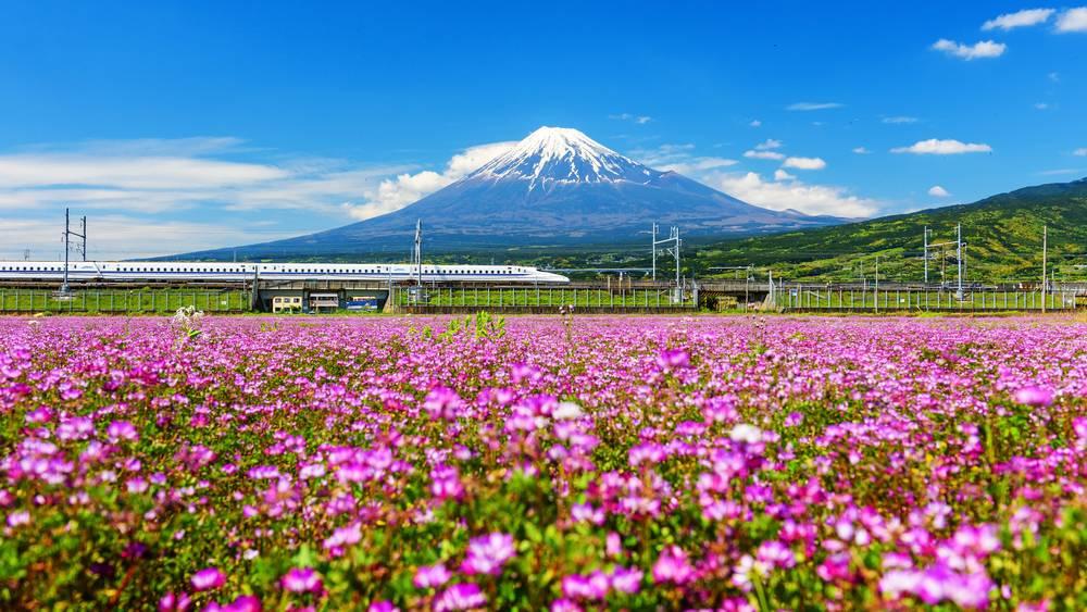 Shinkansen or Bullet train run pass Mount Fuji and Shibazakura at spring. Shinkansen, super high speed railway, operated by Japan Railways companies. 1