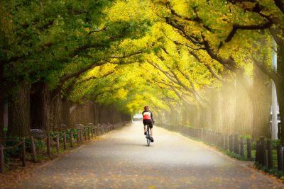 Cyclist on the beautiful gingko trees at the street of Gingko trees, Tokyo Japan