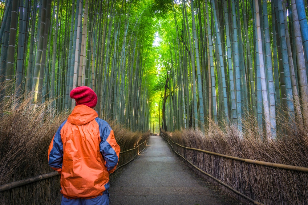 Solo Male Traveler standing from behind at the green bamboo forest in Arashiyama, Kyoto, Japa